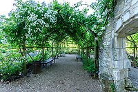 France, Indre-et-Loire, Lémeré, jardins et château du Riveau au printemps, pergola couverte des rosiers 'Château du Rivau' dans la cours du château