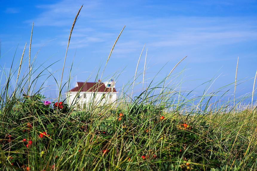 Beach house with dune grass, Cape Cod, Massachusetts, USA