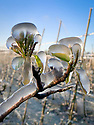 2021_04_08_Frozen_Orchards