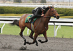 April 03, 2014: Hip 74 Quality Road - Banjo Lesson consigned by Kirkwood Stables worked 1/4 in 20:4.  Candice Chavez/ESW/CSM