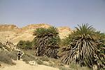 Ein Shaviv in Zin valley