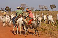 in the Pantanal, the world's largest and wildest wetland, in Brazil, Pantanero (cowboys)  drive the cattle to daily fresh forage in the incredible landscape that is sharing with wildlife, including the beautiful and mysterious jaguar. Jaguars have typically been hunted by people who are trying to protect their cows