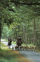 Europe/France/Centre/Sologne/41/Loir-et-Cher/Château de Cheverny: un équipage rentre de la chasse à courre chiens et chevaux