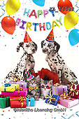 Interlitho-Alfredo, REALISTIC ANIMALS, REALISTISCHE TIERE, ANIMALES REALISTICOS, photos+++++,dogs, party,KL16588,#a#, EVERYDAY