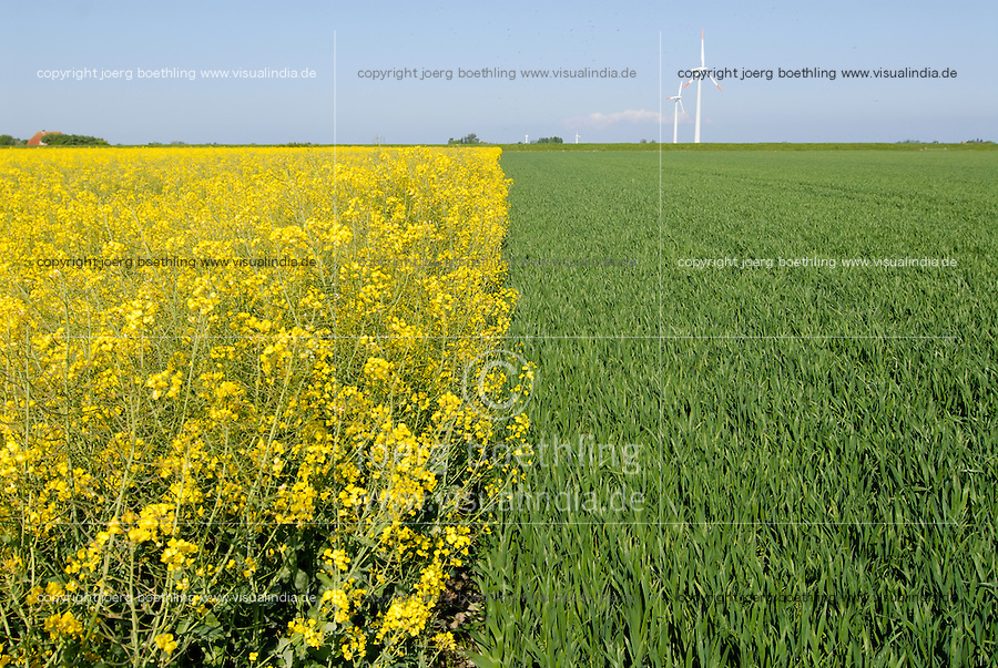 "Europa Deutschland DEU Nordseeinsel Pellworm Rapsfeld und Weizenfeld , Biosprit versus Nahrung Energiepflanzen vs. Nahrungspflanzen. -  Landwirtschaft xagndaz | .Europe Germany GER rapeseed and wheat field on Pellworm island .  -  agriculture biofuel food crop .| [ copyright (c) Joerg Boethling / agenda , Veroeffentlichung nur gegen Honorar und Belegexemplar an / publication only with royalties and copy to:  agenda PG   Rothestr. 66   Germany D-22765 Hamburg   ph. ++49 40 391 907 14   e-mail: boethling@agenda-fototext.de   www.agenda-fototext.de   Bank: Hamburger Sparkasse  BLZ 200 505 50  Kto. 1281 120 178   IBAN: DE96 2005 0550 1281 1201 78   BIC: ""HASPDEHH"" ,  WEITERE MOTIVE ZU DIESEM THEMA SIND VORHANDEN!! MORE PICTURES ON THIS SUBJECT AVAILABLE!! ] [#0,26,121#]"