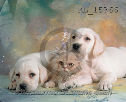 Interlitho, Alberto, ANIMALS, dogs, photos, 2 dogs, cat(KL15766,#A#) Hunde, perros