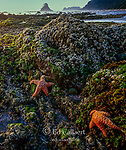 Tidepool, Shi Shi Beach, Olympic National Park, Washington