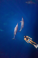 A woman encounters a pod of spinner dolphins while snorkeling off the Kona coast of the Big Island.