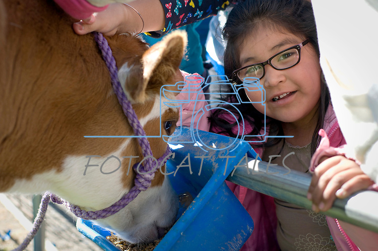 Gladys Cervantes Mejia, 6, of Fremont Elementary School in Carson City, Nev., participates in the cow plop fundraiser, where she was able to meet Buttercup, a Holstein Ayrshire mix.<br /> Photo by Candice Nyando