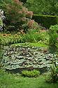 The pond in the Wild Garden, Upton Grey, mid July.