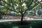 VanDusen Botanical Garden, Vancouver, British Columbia, Canada, North America,