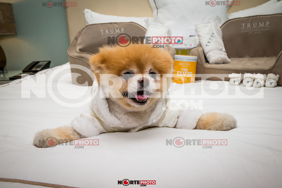 LAS VEGAS, NV - April 28 :  Boo, 'The World's Cutest Dog' sighting at a luxury penthouse at Trump International Hotel in Las Vegas, NV on April 28, 2014. © Kabik/ Starlitepics ***HOUSE COVERAGE***