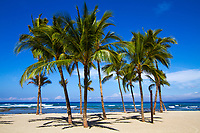 Beautiful white sand beach palm trees with the Pacific Ocean's turquoise water in the background, on the Big Island of Hawaii
