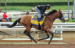 ARCADIA, CA  OCTOBER 29: Hoppertunity on the track at Santa Anita Park, Arcadia, CA on October 29, 2016 (Photo by Casey Phillips/Eclipse Sportswire/Getty Images)