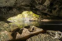 Oparara River flows through limestone arch in Oparara valley in Kahurangi National Park, West Coast, Buller Region, New Zealand