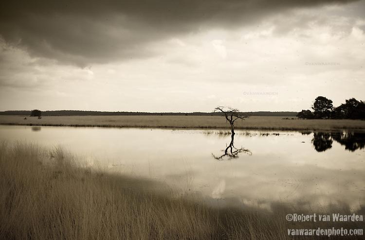 Landscape from the Hoge de Veluwe National Park, the Netherlands..