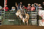SEBRA - Gordonsville, VA - 5.9.2015 - Bulls & Action