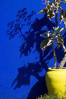 Yellow Pot with Succulent at the Majorelle Garden, Marrakech, Morocco