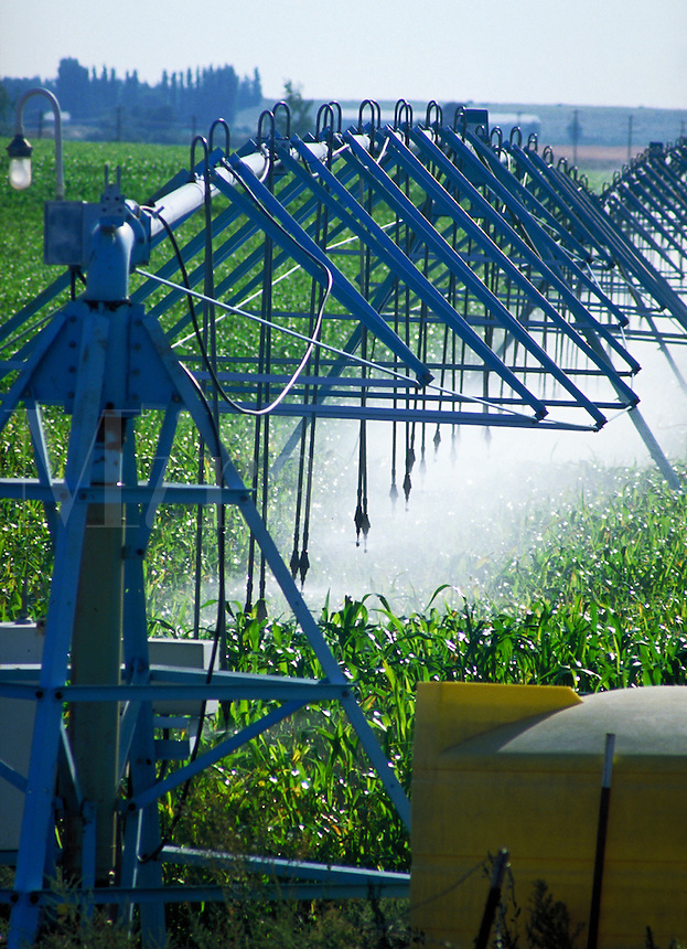 Center pivot irrigation structures spraying water in corn field.