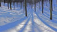 Sachsenwald im Dezember mit Schnee: EUROPA, DEUTSCHLAND, SCHLESWIG- HOLSTEIN, (GERMANY), 11.12.2012: Sachsenwald im Dezember mit Schnee,