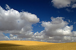 Wheat fields with cumulus clouds with dramatic light Eastern, Washington State USA
