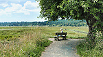 Senior woman sits on bench and looks over Theler Wetlands Nature Preserve, on Hood Canal, fiord, Washington, Belfair, Washington.  Trails, hiking, boardwalks and wildlife.