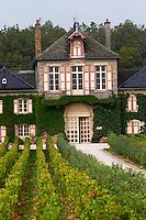 pinot noir vineyard clos des langres ardhuy nuits-st-georges cote de nuits burgundy france