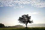 Europa, DEU, Deutschland, Rheinland Pfalz, Naturpark Saar-Hunsrueck, Typische Landschaft, Huegel, Morgens bei Sonnenaufgang, Baum, Obstbaum, Apfelbaum, Silhouette, Nebel, Dunst, Kategorien und Themen, Natur, Umwelt, Landschaft, Jahreszeiten, Stimmungen, Landschaftsfotografie, Landschaften, Landschaftsphoto, Landschaftsphotographie, Wetter, Himmel, Wolken, Wolkenkunde, Wetterbeobachtung, Wetterelemente, Wetterlage, Wetterkunde, Witterung, Witterungsbedingungen, Wettererscheinungen, Meteorologie, Bauernregeln, Wettervorhersage, Wolkenfotografie, Wetterphaenomene, Wolkenklassifikation, Wolkenbilder, Wolkenfoto<br /> <br /> [Fuer die Nutzung gelten die jeweils gueltigen Allgemeinen Liefer-und Geschaeftsbedingungen. Nutzung nur gegen Verwendungsmeldung und Nachweis. Download der AGB unter http://www.image-box.com oder werden auf Anfrage zugesendet. Freigabe ist vorher erforderlich. Jede Nutzung des Fotos ist honorarpflichtig gemaess derzeit gueltiger MFM Liste - Kontakt, Uwe Schmid-Fotografie, Duisburg, Tel. (+49).2065.677997, <br /> archiv@image-box.com, www.image-box.com]