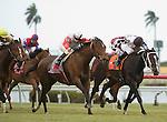 10 January 2010: Quiet Harbor (gray) and Jockey Eddie Castro battle Romacaca (orange) to win the Marshua's River Stakes at Gulfstream Park in Hallandale Beach, FL.