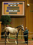 September 14, 2015: Hip 238 Distorted Humor - Dreaming Of Liz colt consigned by Taylor Made Sales.  Candice Chavez/ESW/CSM