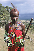 Lolgorian, Kenya. Siria Maasai. Medicinal plants: 'Eutuleli'; 'Osocomoy'; boiled roots and leaves for Foot & Mouth disease. Teclea sp. or Vepris sp.