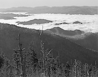 """""""View From The Clingmans Dome Parking Area"""" <br /> Great Smoky Mountains National Park, North Carolina<br /> <br /> Early mornings sometime offer spectacular views of clouds nestled in lower valleys and such views are commonly seen at the Clingmans Dome parking area. Since my camera faced the general direction of the sun, the contrast of the scene was strong  and I decreased negative development time to reduce image contrast in the film."""