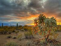 Sonoran Sunset - Arizona
