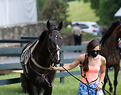 Zoom Zoom Zoe wins at Middleburg Spring Races