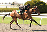07 April 2011.  Hip #126 MISS SENSIBILITY  Street Sense - Cuyahoga filly consigned by Niall Brennan Stables, works 1/4 in 21.0