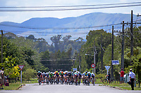 The peleton comes down the home straight on the final lap. Stage Three of the 2018 NZ Cycle Classic UCI Oceania Tour (Masterton to Martinborough) in Wairarapa, New Zealand on Friday, 19 January 2018. Photo: Dave Lintott / lintottphoto.co.nz