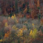 Wald im Herbst, fall-forest, Vaduz, Rheintal, Rhine-valley, Liechtenstein.
