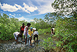 Collecting periwinkles in a mangrove swamps, Tiwi people, Bathurst Island, Australia