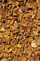 Sun-dried apricots in Turkey