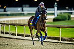 October 31, 2018 : Abel Tasman, trained by Bob Baffert, exercises in preparation for the Breeders' Cup Distaff at Churchill Downs on October 31, 2018 in Louisville, Kentucky. Evers/ESW/Breeders Cup