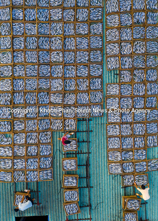 Thousands of trays packed with fish are laid out to dry under the burning sun.  Fish arrive in bulk by sea before they are steamed and loaded into wooden trays.<br /> <br /> Hundreds of workers then pile the trays onto rooftops to start the one-day drying process.  Photographer Khanh Phan said he was 'overwhelmed' by the size of the Long Hai fish market in Vung Tau, Vietnam.  SEE OUR COPY FOR DETAILS.<br /> <br /> Please byline: Khanh Phan/Solent News<br /> <br /> © Khanh Phan/Solent News & Photo Agency<br /> UK +44 (0) 2380 458800