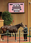Hip 243 Samantha Nicole, full sister to Rachel Alexandra, consigned by Gainesway, sold for $700,000 to Stonestreet Stables who also owns Rachel Alexandra.   November 7,2012.