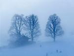 CHE, Schweiz, Kanton Bern, Berner Oberland, Grindelwald: Skilaufen im Nebel | CHE, Switzerland, Bern Canton, Bernese Oberland, Grindelwald: skiing in the haze