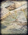 10.20.13 - Berries On The Rocks….