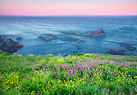 Yellow mustard and fireweed. Yaquina Lighthouse, Oregon