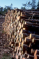 Harvested trees<br />