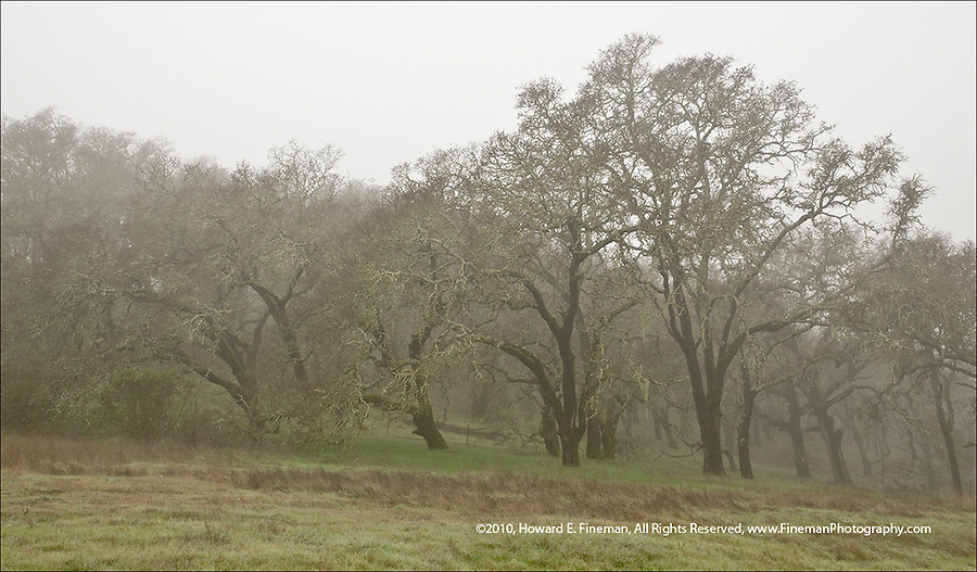 Trees in winter fog along Cal Rte 12 north of Sonoma