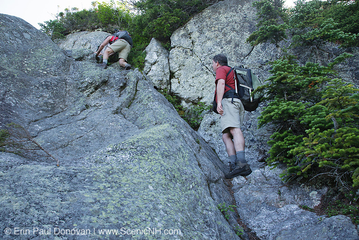 Hikers ascending the Six Husbands Trail in the Great Gulf Wilderness in Thompson and Meserve's Purchase, New Hampshire during the summer months; part of the Presidential Range in the White Mountains.