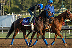 ARCADIA, CA  OCTOBER 30: Breeders' Cup Turf Sprint entrant Eddie Haskell, trained by Mark Glatt,  exercises in preparation for the Breeders' Cup World Championships at Santa Anita Park in Arcadia, California on October 30, 2019. (Photo by Casey Phillips/Eclipse Sportswire/CSM)