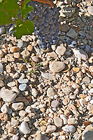 Soil detail. Stony. Chateau Phelan-Segur, Saint Estephe, Medoc, Bordeaux, France